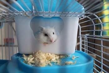 best hamster cage