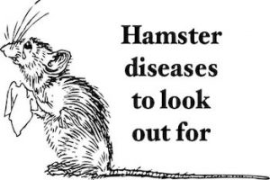 hamster diseases